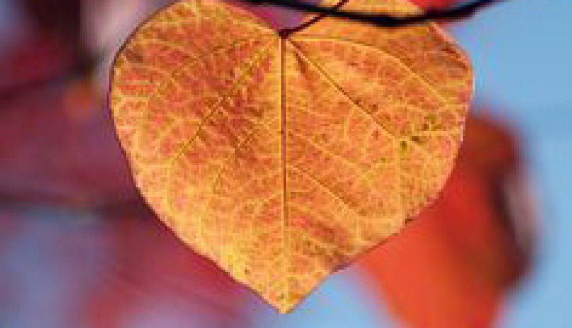 hjertets længsel